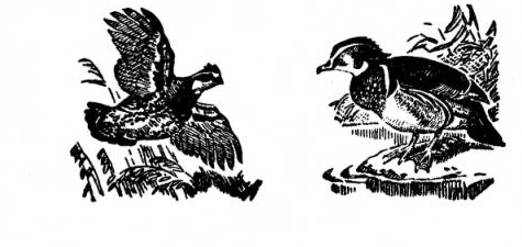 Wildlife Society Transactions image