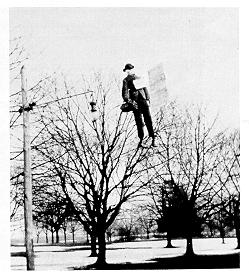 old black and white photograph of effigy in a tree on campus mal