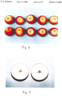 Image of apples as an example of a plant patent.